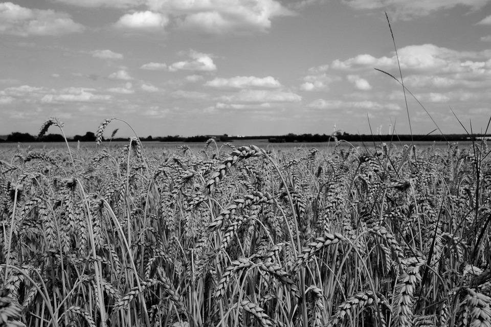 Sachplan «landwirtschaftliche Forschungsstandorte» kann Konflikte lösen